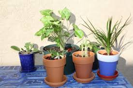 funeral plants good to grow