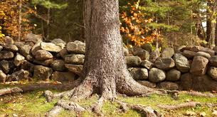 4 steps to dealing with invasive tree roots lowe u0027s for pros