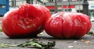 Seeking Rotten Tomatoes Fiercebiotech S Rotten Tomatoes And Ripening Fruit 2017