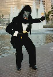 cheap singing telegrams this well dressed gorilla delivers singing telegrams animals in