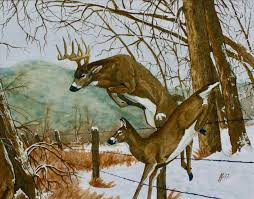 whitetail deer home decor in the deer by rosemary millette with