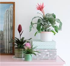 10 decorating tips for your first place add a plant