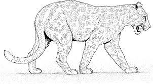 elegant cheetah coloring pages 38 for your free coloring kids with