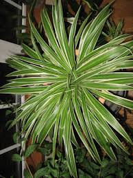 Best Indoor Plants Low Light by 5 Hardy Hard To Kill Houseplants For Apartments With Low Light E2