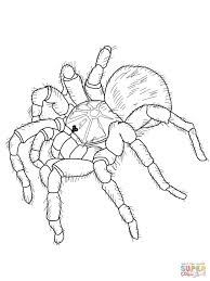 tarantula coloring page printable pictures tarantula coloring