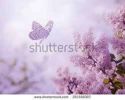 beautiful butterfly flowers stock photo 261556307