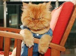 Mad Kitty Meme - hilarious photos of cats with very angry faces daily mail online