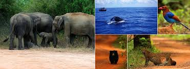 Sri lanka wildlife safari tours sri lanka wildlife tours