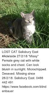 Missing Cat Meme - lost phone cat meme phone best of the funny meme