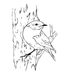 blue bird coloring download u0026 print coloring pages