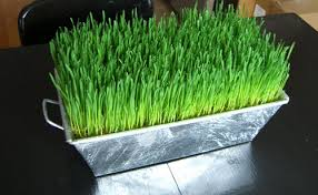 easter grass in bulk easter grass table decor your homebased