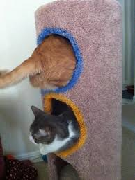 Thinking Cat Meme - cat house portals thinking with portals know your meme