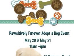 may 21 adopt a event fair lawn saddle brook nj patch