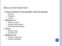 Role Of Brain Stem Brain Stem 2014