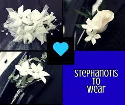 Stephanotis Flower Flower Spotlight Of The Month The Stephanotis Enchanted Florist