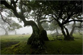 forest images magical tree hd wallpaper and background photos