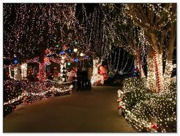 enchanted forest christmas lights enchanted forest christmas lights