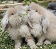 rabbit bunny rabbit behaviour understand why your bunny does that best 4 bunny