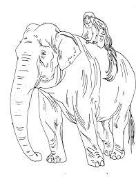 my sketchblog zoo sketches