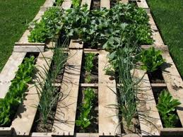 suburban food bowl growing food in raised beds the greening of
