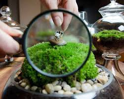 self sustaining terrarium fish tank easy ideas for self