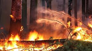 Wildfire Yosemite 2013 by Fuel In The Fire Burn Wood For Power Or Leave It To Nature Npr