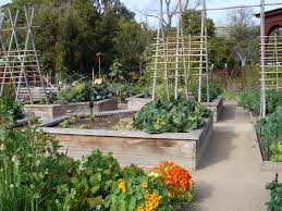 container vegetable growing organic veges 4 health