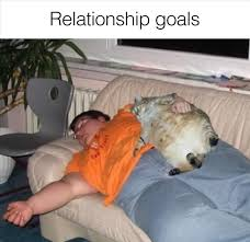Relationship Goals Meme - relationship goals funny picture of the day funny website