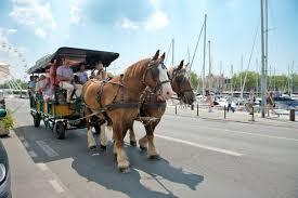 location chambre la rochelle visite guidée la rochelle au pas des chevaux la rochelle