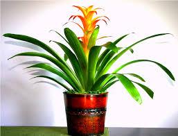 best tropical house plants ideas home decor inspirations