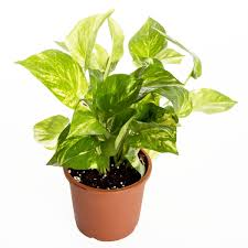 Plants In House Want To Keep Your House Cool Without An Ac Bring These Plants In