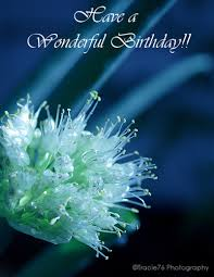 sending you birthday wishes free flowers ecards greeting cards