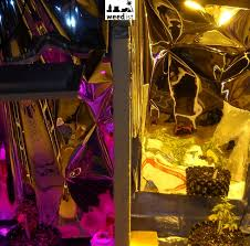 400 Watt Hps Grow Light Rhinogrow Led Grow Light Comparison 400w Hps Vs 172w Led Weedist