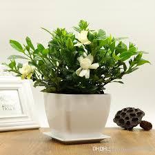 2017 20 pcs gardenia potted flower ornamental plant air