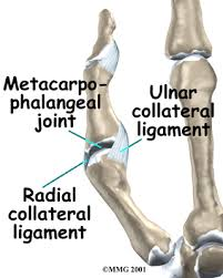 Collateral Ligaments Ankle Gamekeeper U0027s Skier U0027s Thumb Houston Methodist