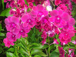 list of ornamental plants with pictures list diy home plans database