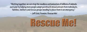 affenpinscher for adoption rescue me affenpinscher rescue home facebook