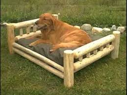 Dog Sofas For Large Dogs by Pictures Of Dog Beds For Large Dogs Dog Beds For Large Dogs Dogs