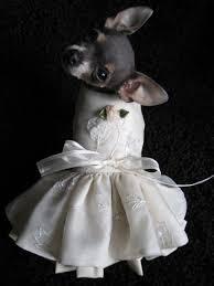 dog wedding dress custom couture dog wedding dresses