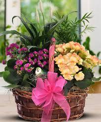 begonia u0026 kalanchoe garden basket a marvelous medley of colorful