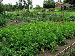 growing history in south amana iowa u2013 homegrown iowan