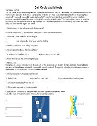 homework mitosis worksheet diagram identification answers jewel