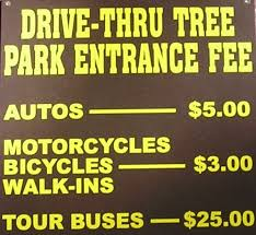 Chandelier Tree Address California Redwoods Northern California U0027s Chandelier Drive Thru