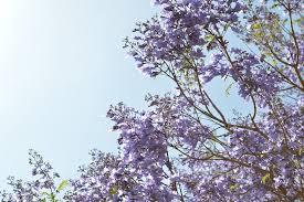 free photo flower tree flowers purple free image on pixabay