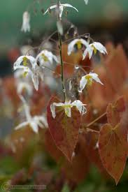native woodland plants 21 best new england plants images on pinterest native plants