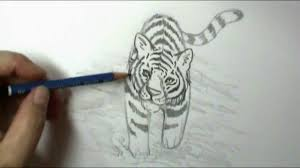 how to draw a tiger youtube