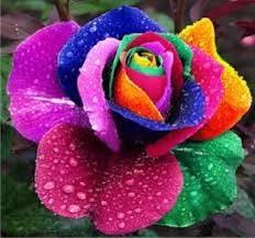 imagenes flores bellisimas las flores mas lindas del mundo fotos bellisimas flores y rosas