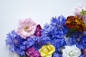edible blue flowers live eat learn easy vegetarian recipes one ingredient at a time