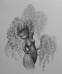 weeping willow tree drawing clipartxtras