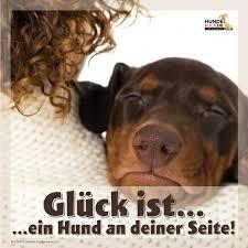 schöne hundesprüche glück ist ein hund an deiner seite hund glück ist